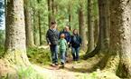 Castle O'er Forest