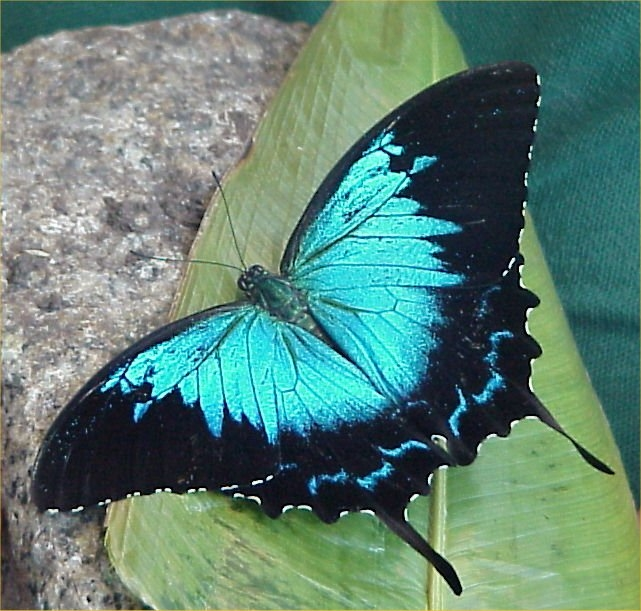 Edinburgh Butterfly  U0026 Insect World  Edinburgh  U2013 Wildlife