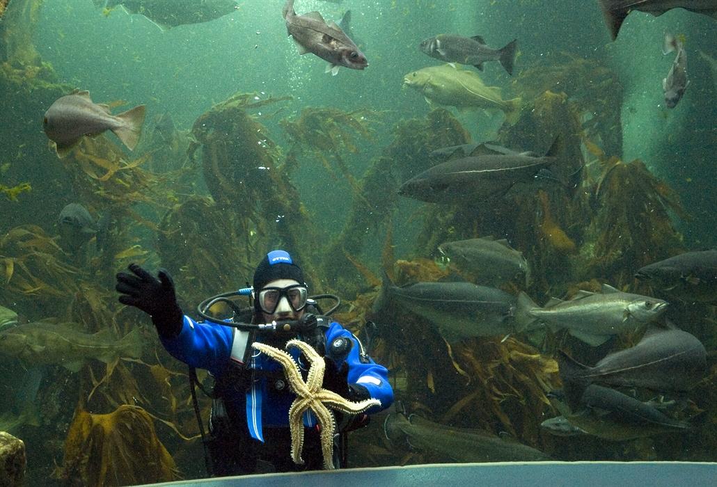 Macduff marine aquarium macduff marine life centres for Spacearium aquariums