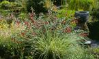 Greenbank Garden