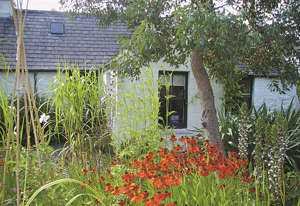 Garden Centre: Elmlea Plants, Newton Stewart – Garden Centres