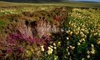 RSPB Scotland Birsay Moors nature reserve