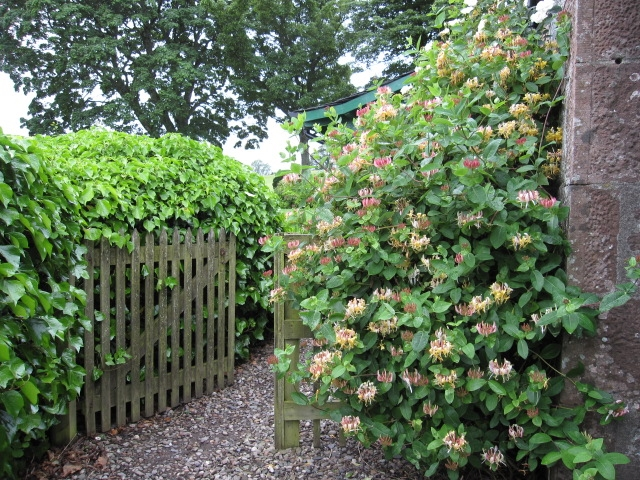 Landscaping With Honeysuckle : Winters cottage visitscotland